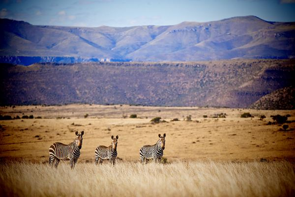 Karoo, Samara Private Game Reserve, South Africa