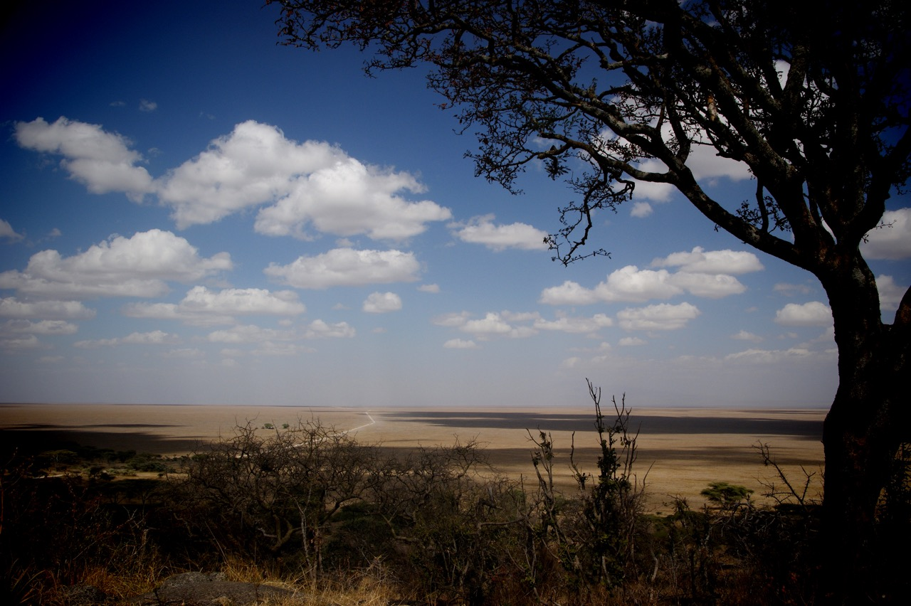 Safari through the Savannah of the Serengeti, Tanzania