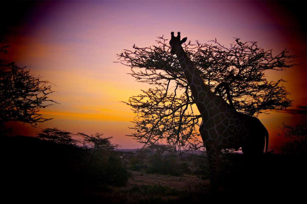 Wanderlust Africa, Africa, Incentive Travel, Tailor-made Safari Holidays, Extraordinary Events, Safari