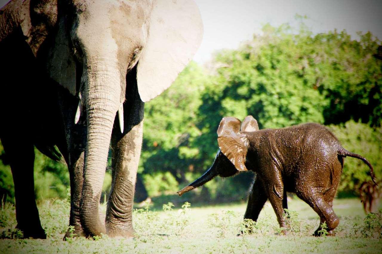 Wanderlust Africa, Africa, Incentive Travel, Tailor-made Safari Holidays, Extraordinary Events, Safari