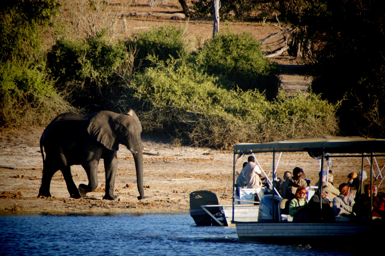 Boot-Safari and Elephants (Elefanten) an der Chobe River Front, Chobe National Park, Botswana