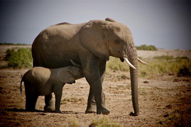 Elephants in Hwange Zimbabwe