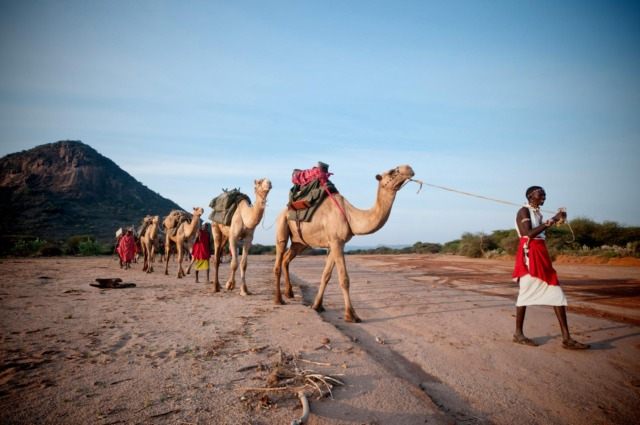 Karisia Camel Safaris with Samburu warriors as guides and handlers