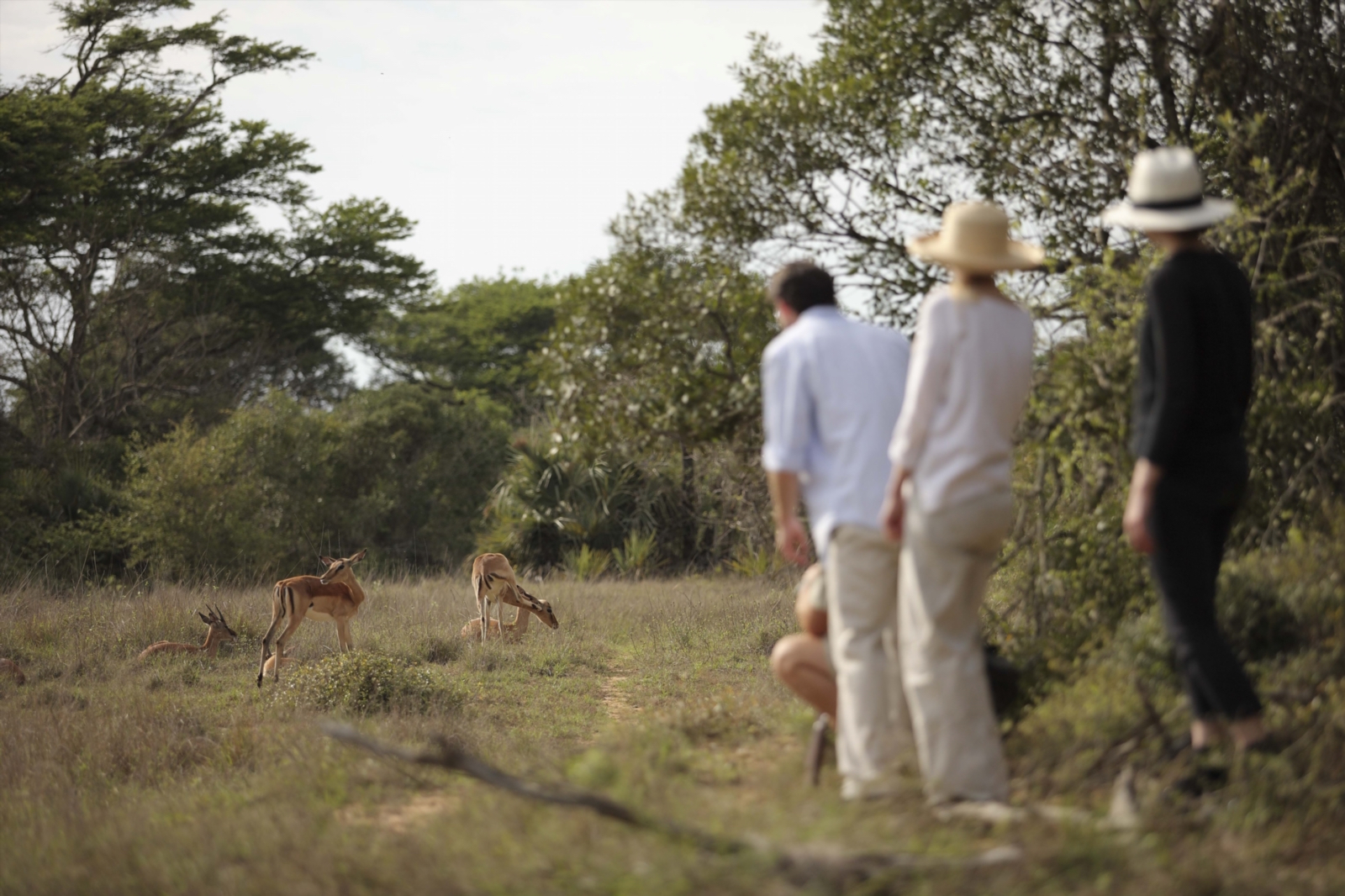 Game Walks (Bush walks) at Phinda Private Game Reserve, South Africa