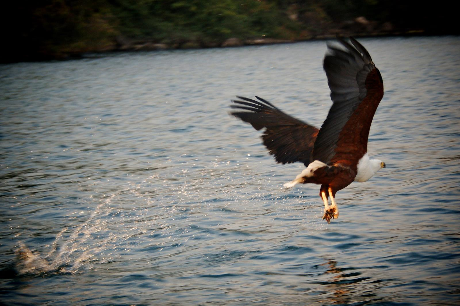 Boot-safari on the lake of stars with fish eagle encounter, Lake Malawi