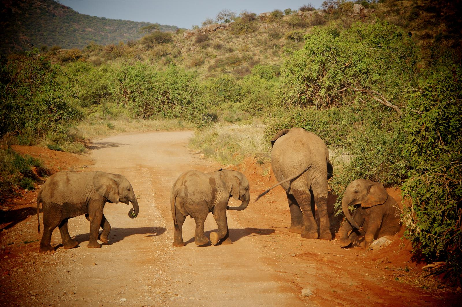 Safari and Elephant Encounters at Samburu National Park, Kenya