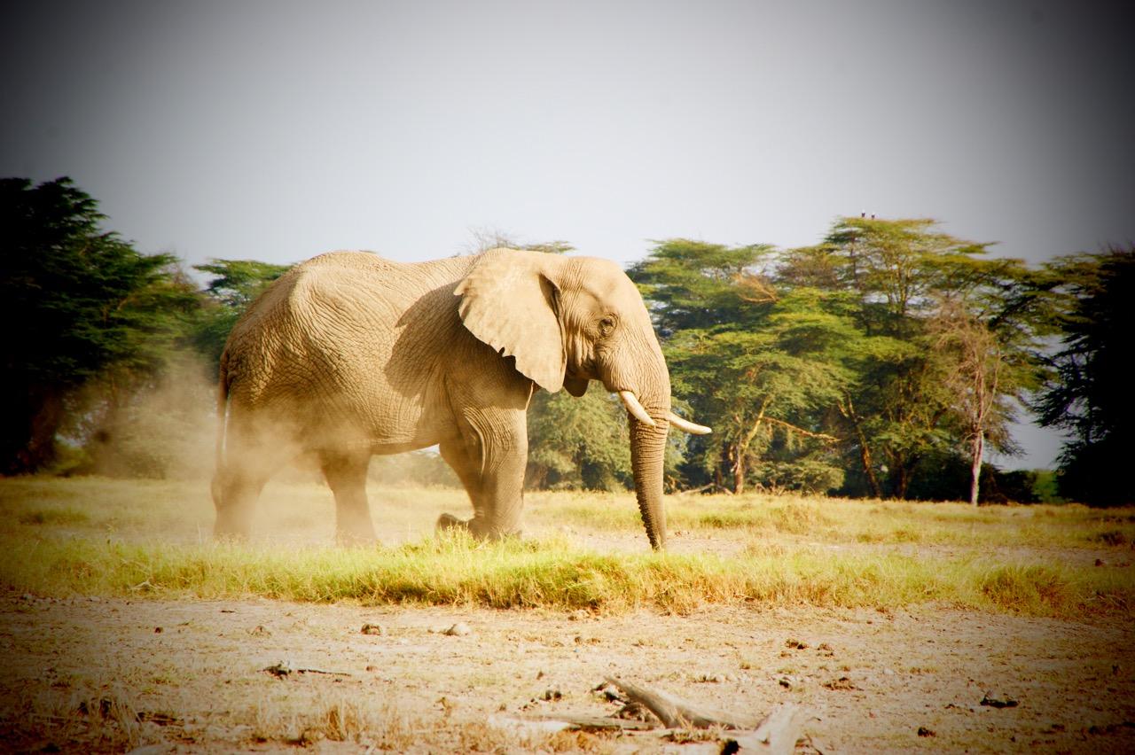 Safari und Elephanten Begegnungen im Hwange Nationalpark, Simbabwe