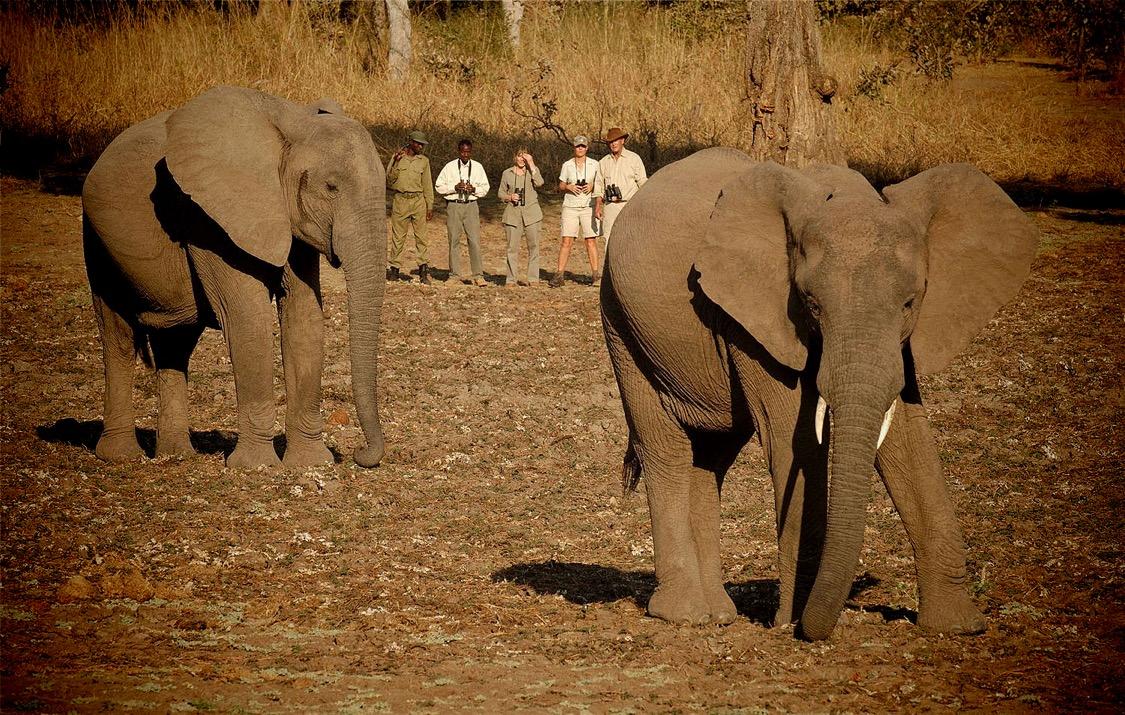 Safari and Elephants at The Hide, Hwange National Park, Zimbabwe