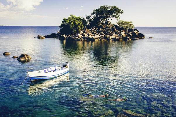 Springbock im Etosha National Park, Namibia