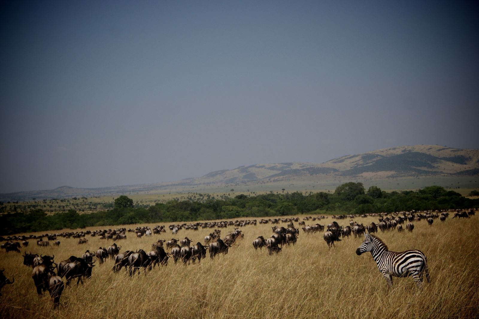 Safari to the Wildebeest Migration in Masai Mara, Kenya