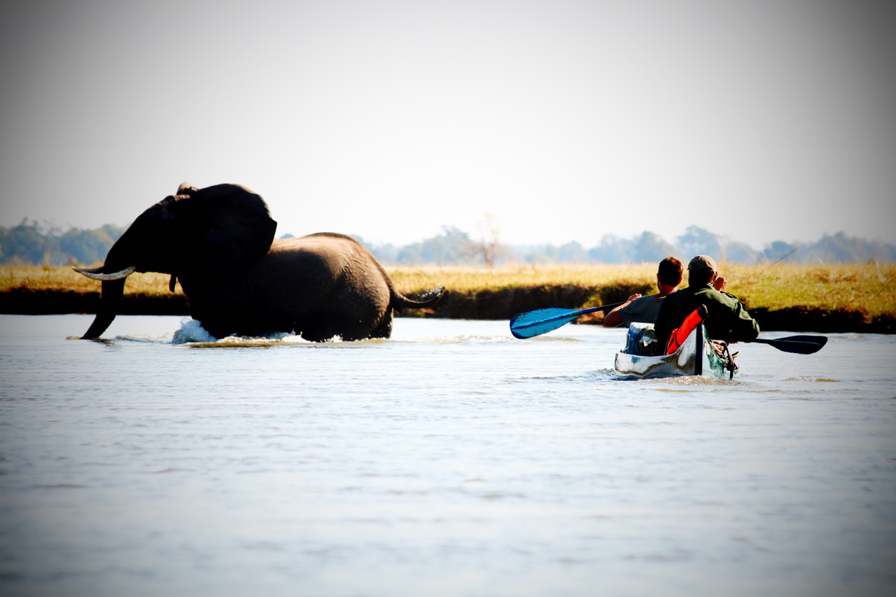 Mana Shoreline Canoeing Safari, Zambezi, Zimbabwe, Mana Pools National Park, Natureways