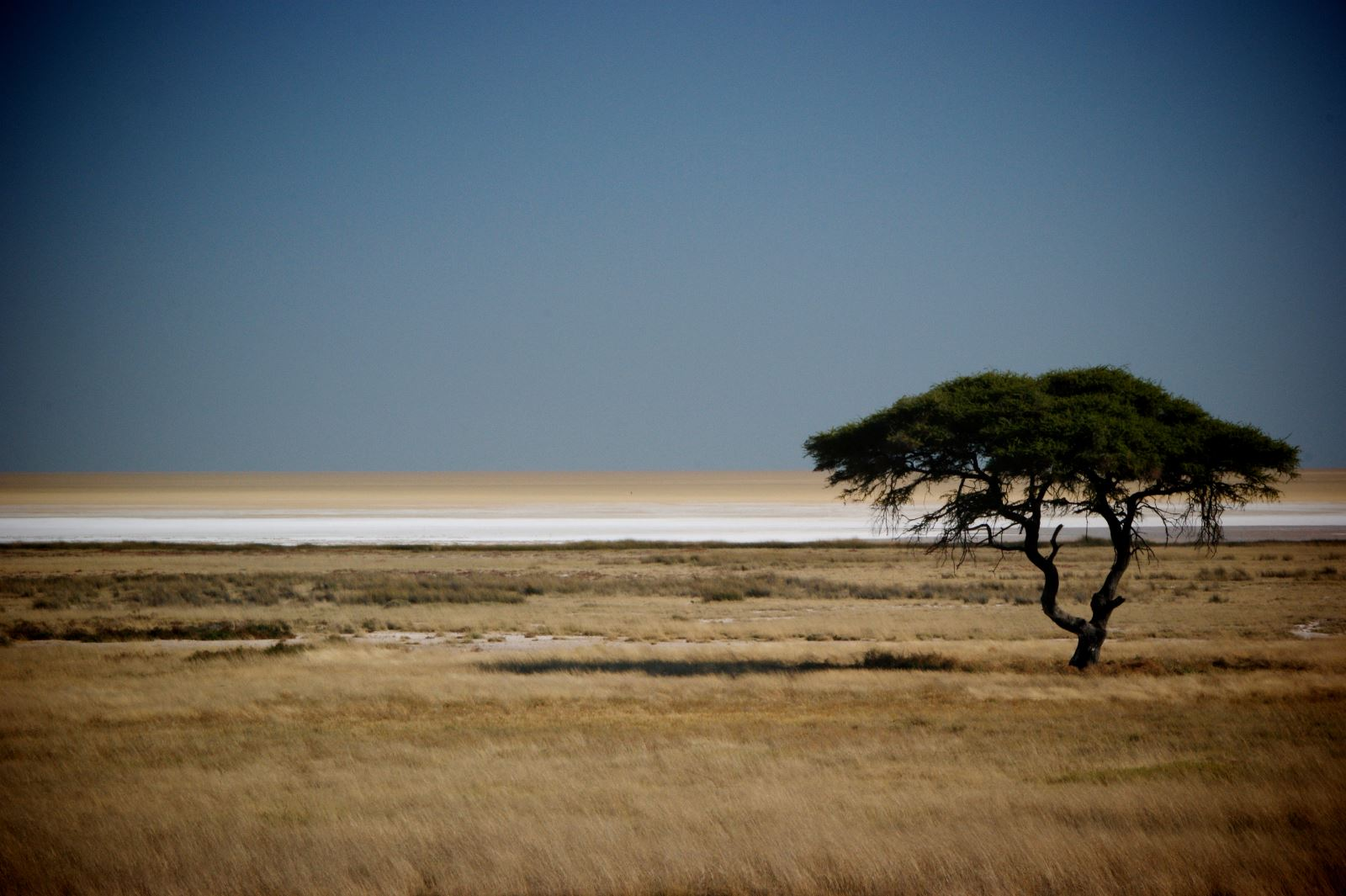Safari in Etosha National Park, Namibia