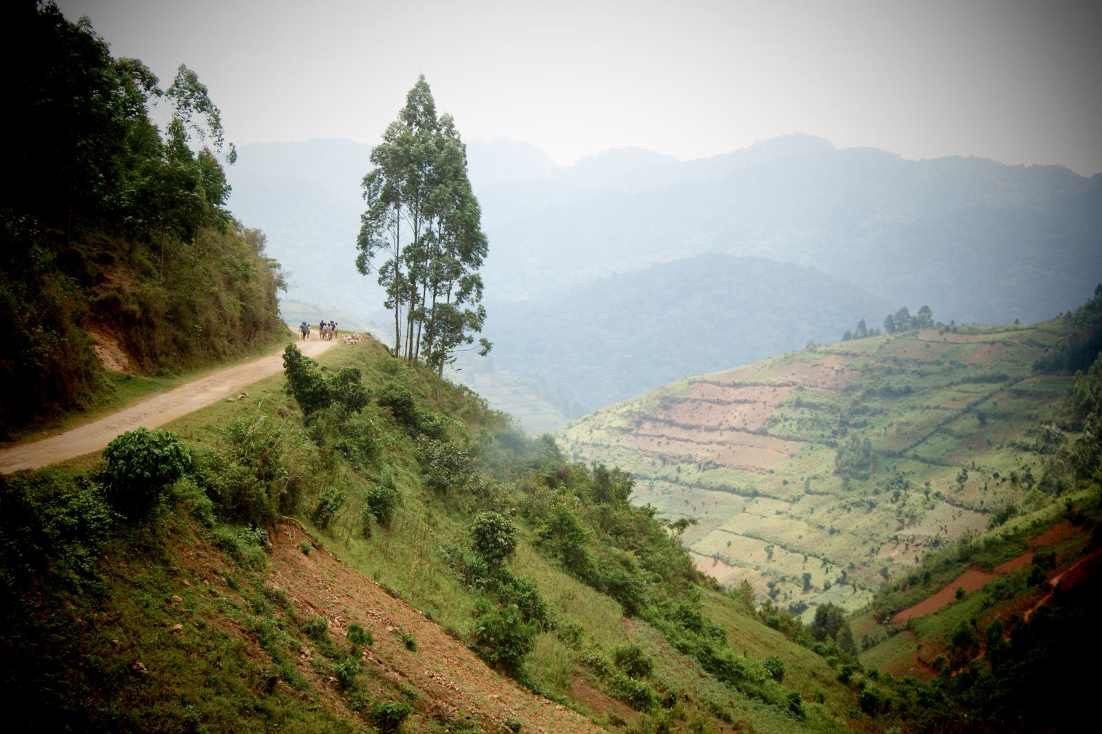 Safari zum Bwindi Nationalpark in Uganda