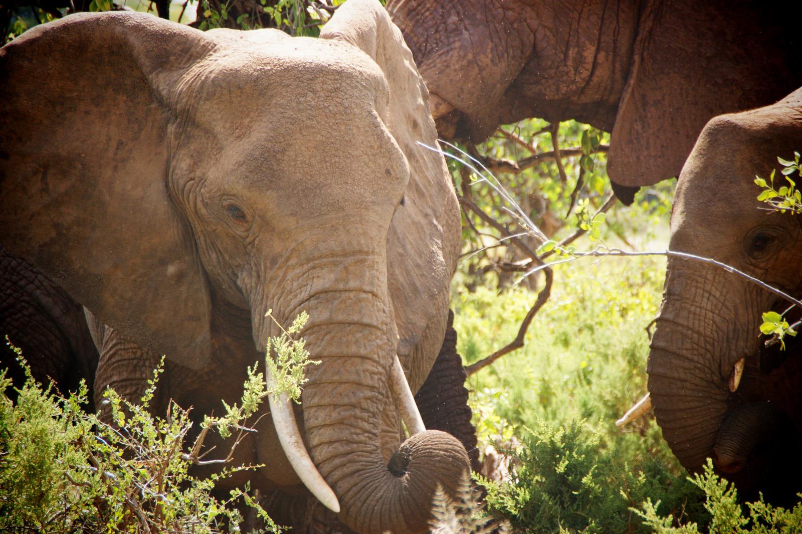 Safari und Elephanten Begegnungen im Samburu Nationalpark, Kenia