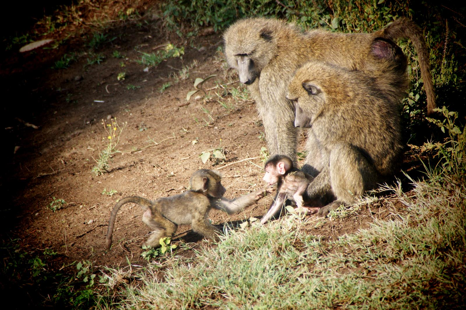Primate Encounters during Safari in Malawi