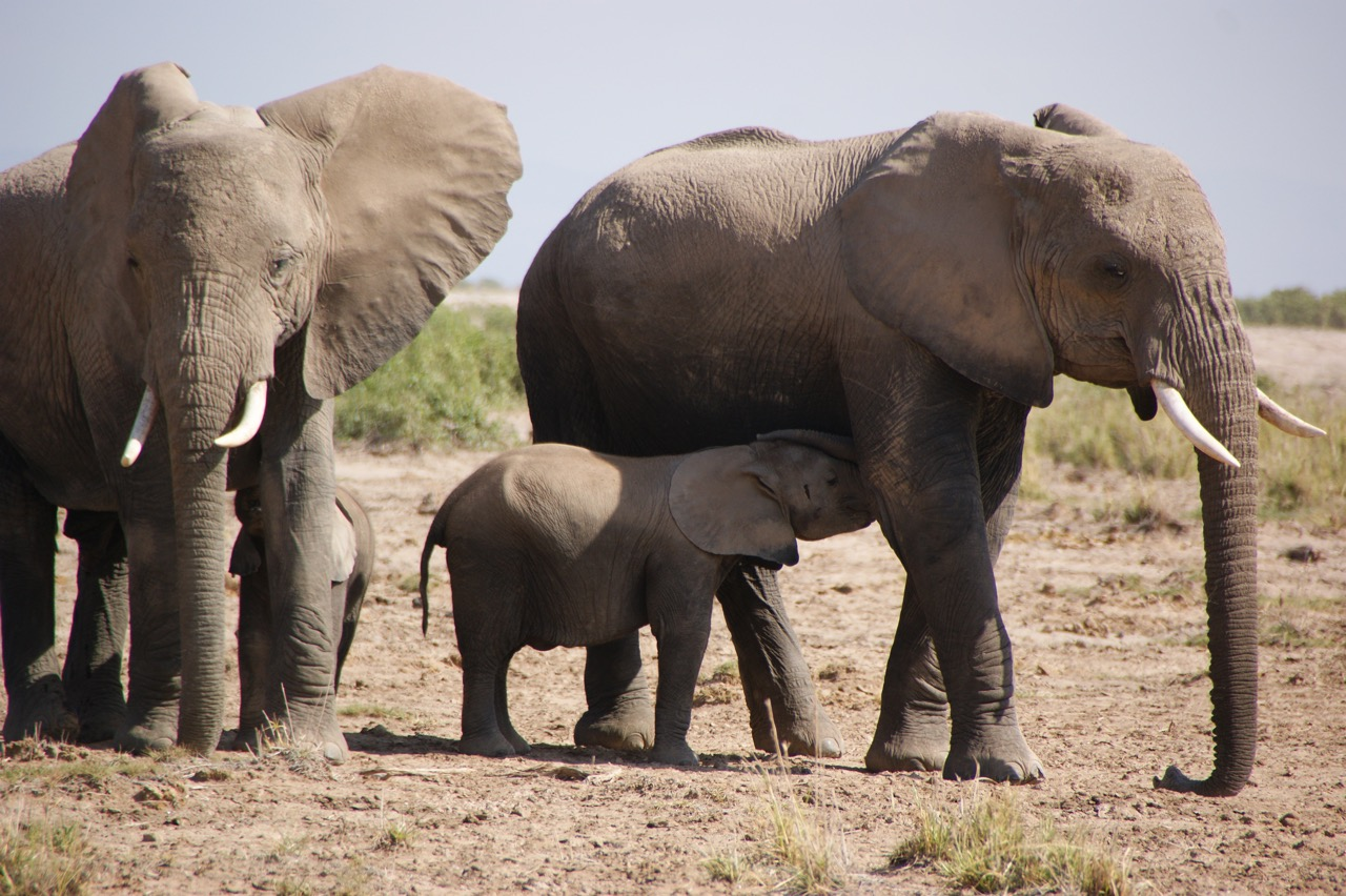 Safari and Elephant Encounters at Hwange National Park, Zimbabwe