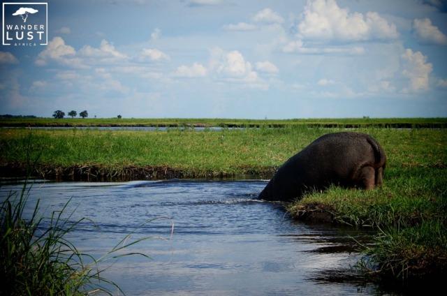 Chobe River Front Botswana