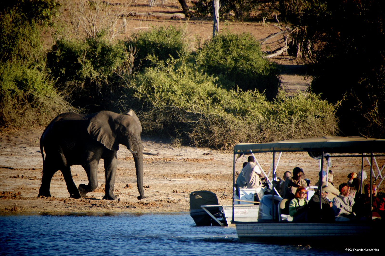 Boot-Safari, Botswana, Chobe River Front, Elephants
