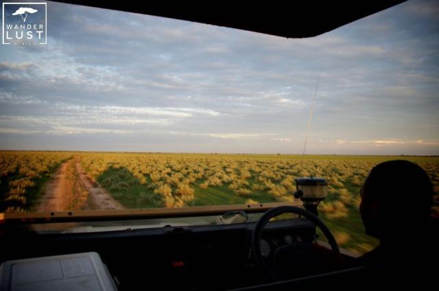 Pirschfahrten in der Kalahari