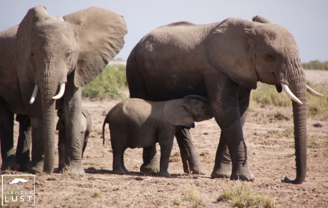 Elefanten in Hwange Zimbabwe