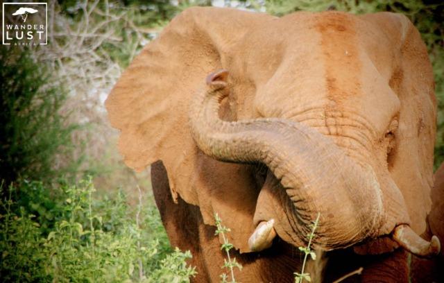 Elefant im Addo Elephant Park Südafrika