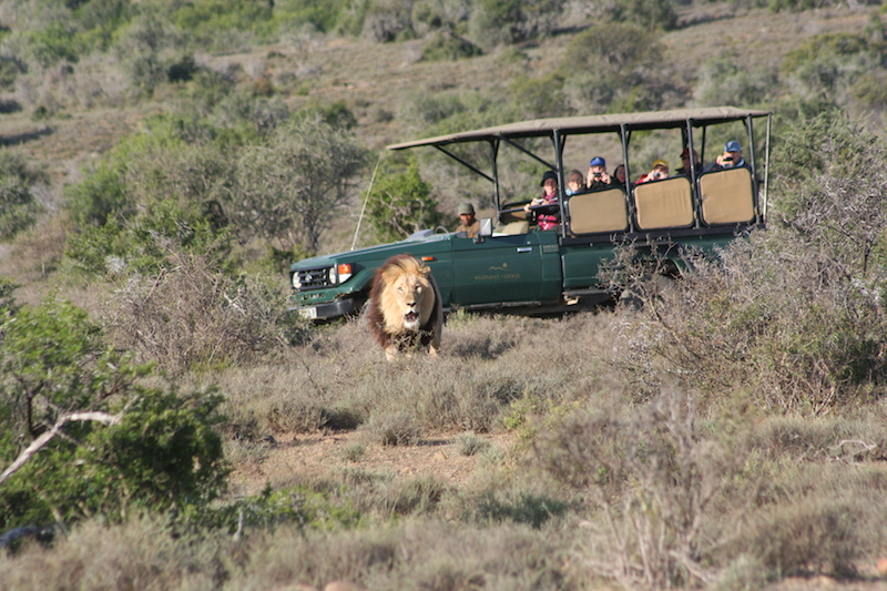 Game drives, Kuzuko Lodge, Eastern Cape Game Parks, South Africa