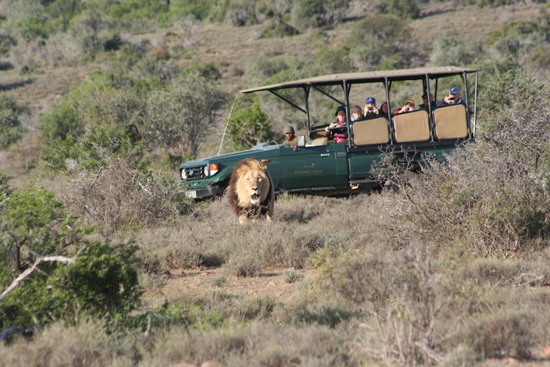 Pirschfahrten, Kuzuko Lodge, Eastern Cape Game Parks, Südafrika