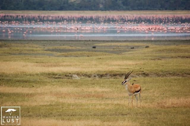 Lake Magadi, Ngorongoro Krater, Tansania