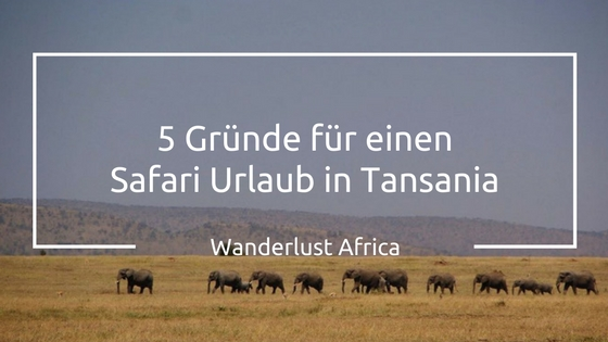 Safari Urlaub in Tansania