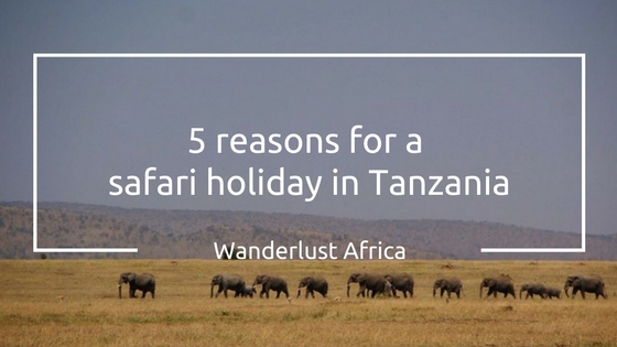 Safari Holiday in Tanzania
