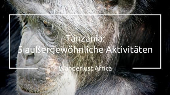 Schimpansen Trekking ist eine der vielen Aktivitäten in Tansania