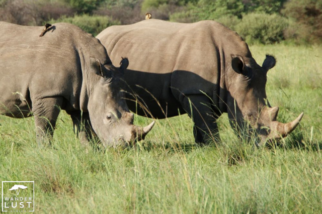 Rhino Tracking and Khama Rhino Sanctuary Botswana