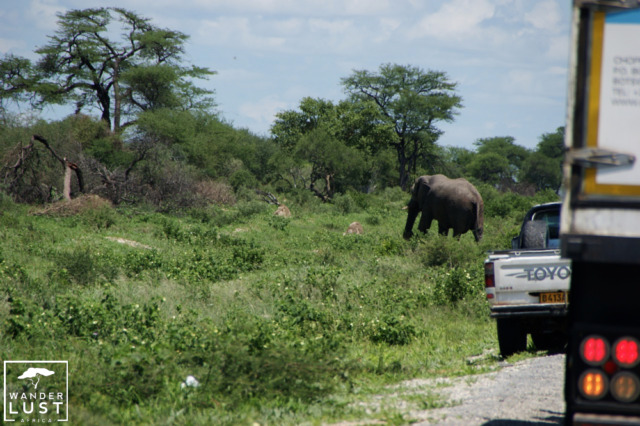 Elephant Crossing Highway in Botswana