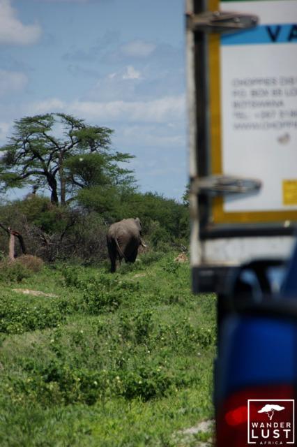 Elefanten überqueren die Hauptstrassen in Botswana