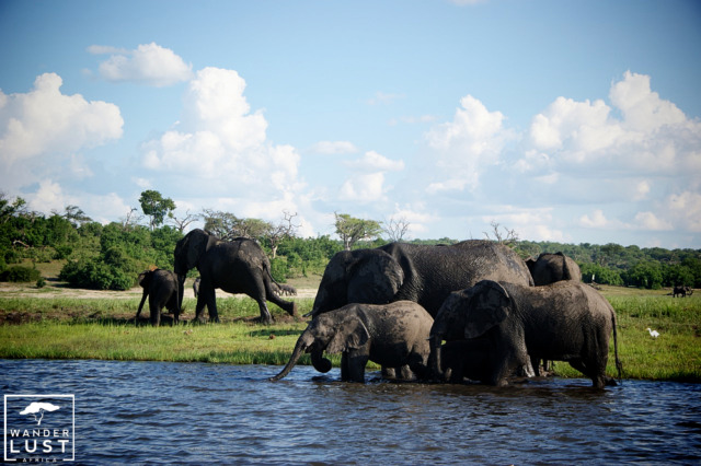 Elefanten an der Chobe River Front in Botswana