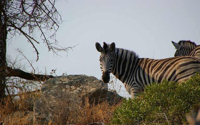 Hluhluwe-iMfolozi national park , South Africa